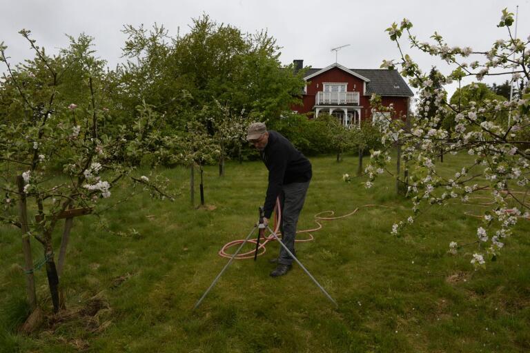 Björn Idlinge har 4 500 äppelträd att ta hand om. Genom åren har han lärt sig att det krävs att man ständigt håller koll på träden.