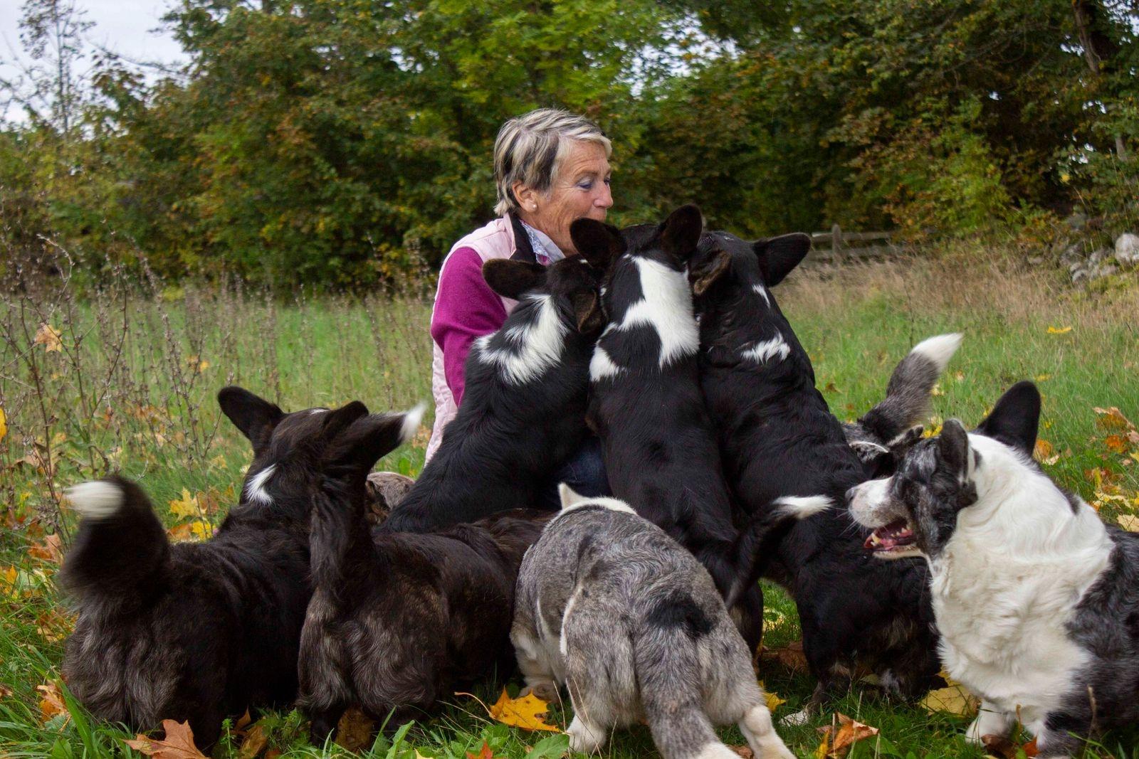 Ibland kan det bli överväldigande med åtta hundar som vill ha godis samtidigt.