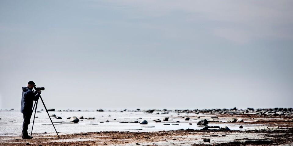 Gammalsby sjömarker på sydöstra Öland anses som ett av Europas bästa fågelområden. Fågelguiden Donat Hullmann visar Barfotateamet artrikedomen, från den lilla gransångaren med sin karakteristiska sång, till havsörnen, Sveriges största fågel.