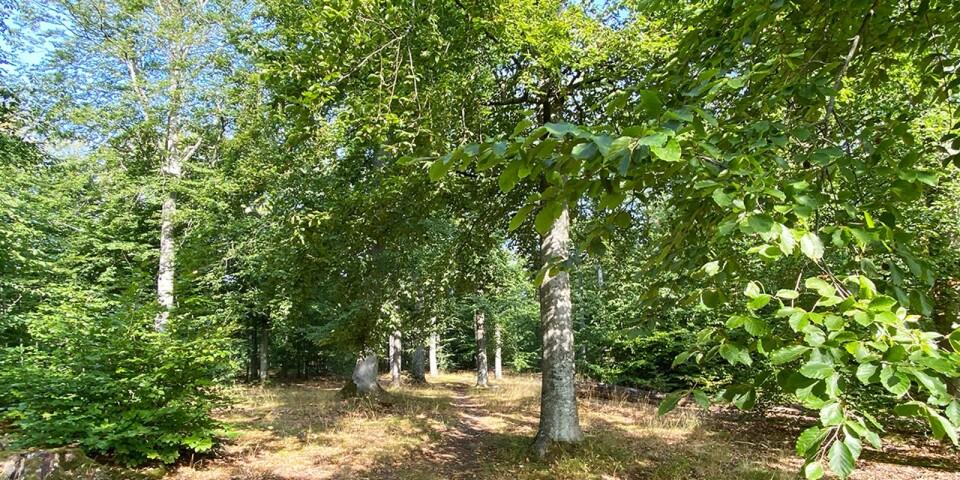 Framtiden för den tätortsnära bokskogen i Vitahall avgörs på måndag.