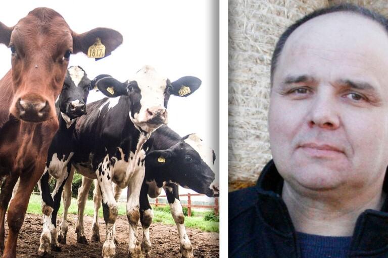"""Öländska mjölkbönder kämpar mot salmonella: """"Ett dilemma"""""""