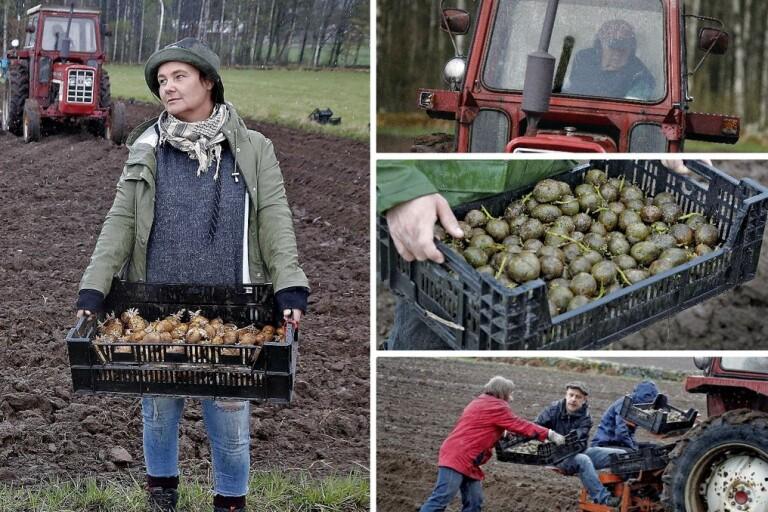 Potatiskollektivet – ett ställningstagande