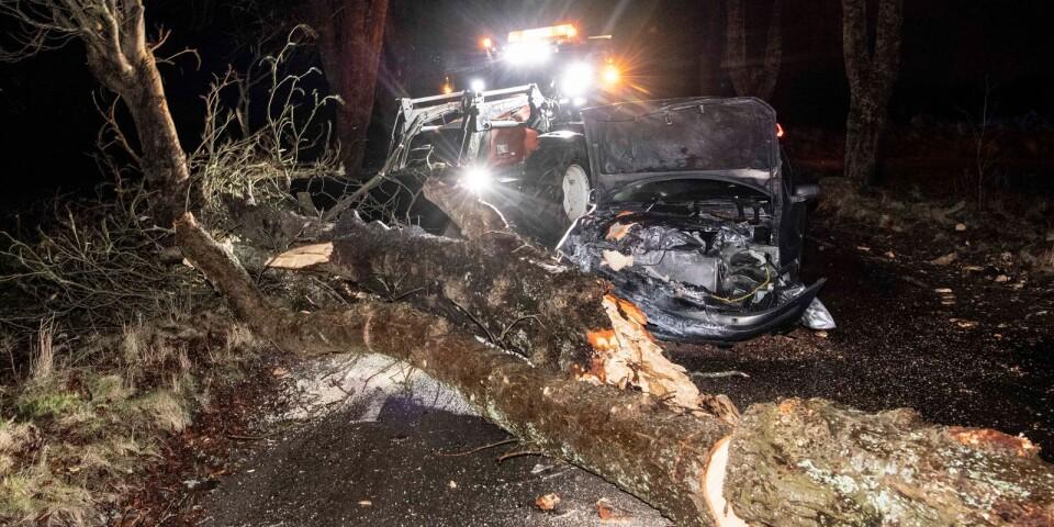 Stomen Ciara orsakade dess bättre inga akuta skador på skogen.