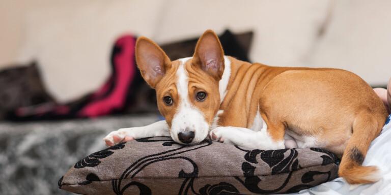 Många skaffade hund i våras – men det kan bli problem när husse och matte ska återgå till jobbet. Arkivbild.