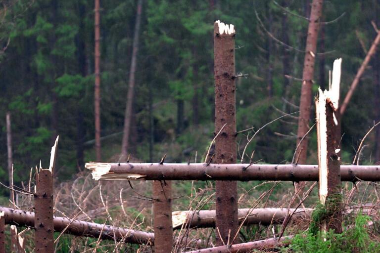 Hoten mot skogen är många. De ökar till följd av klimatförändringarna.