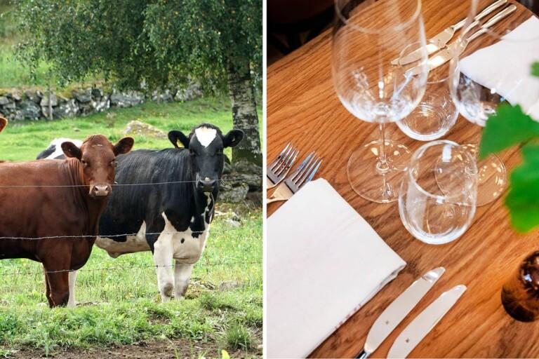 Stängda gränser och bunkrade basvaror – kommer vi alltid ha mat på bordet?