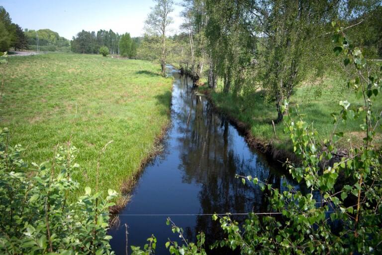 Ny våtmark ger även ny besöksplats