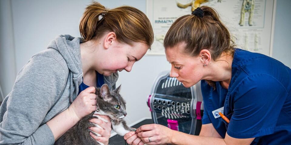 Det gäller att vara envis och ha en positiv inställning för att jobba som veterinär.