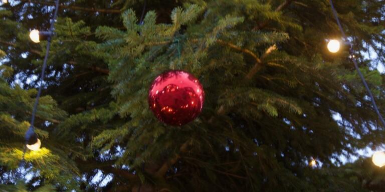 Allt du behöver veta om årets julgran