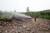 Väder: Risk för skogsbrand i nästan hela Sverige