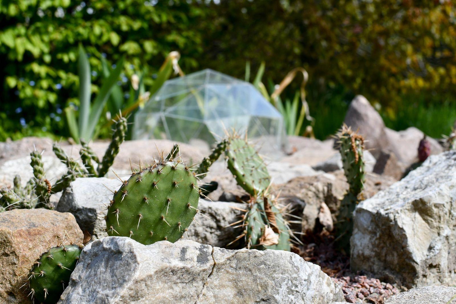 Ett överraskande inslag i trädgården är ökenlandskapet, med en domemodell i miniatyr som Werner konstruerat för att kunna mäta vinklarna inför bygget i fullstorlek.