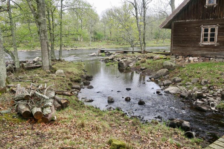 Maj månad bjuder på natursköna upplevelser vid fisket vid Ems herrgård.