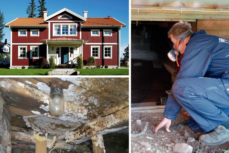 Hus i väst med krypgrund mer utsatta för fuktskador – så kan de förebyggas