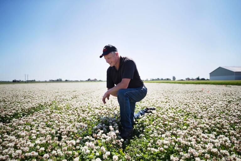 Fröodlaren Bo Emanuelsson lyssnar på det avslappnade ljudet av humlorna och bin som surrar på vitklöverfältet.