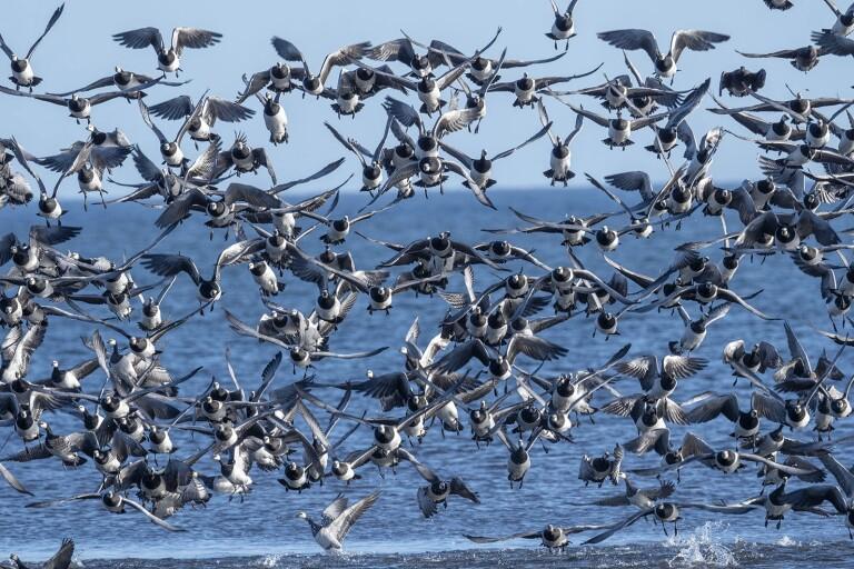 Från Rysslands arktiska öar till ängarna på Öland och Huseby