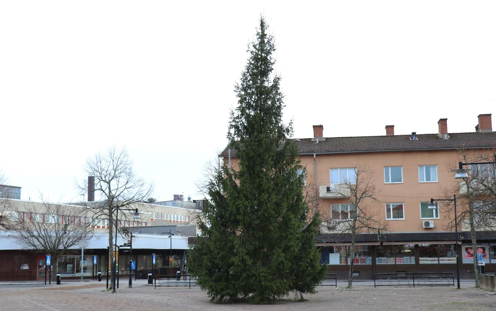HULTSFRED: Granen hämtad på kommunens mark vid hembygdsparken i Målilla.