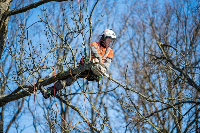 """PÅ JOBBET: """"Vi är ambassadörer för träden"""""""