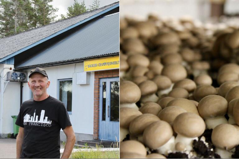Snabbväxande svamp frodas i bensinmacken – levererar 50 ton