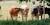 Kor fastnade i träsk: Kunde räddas
