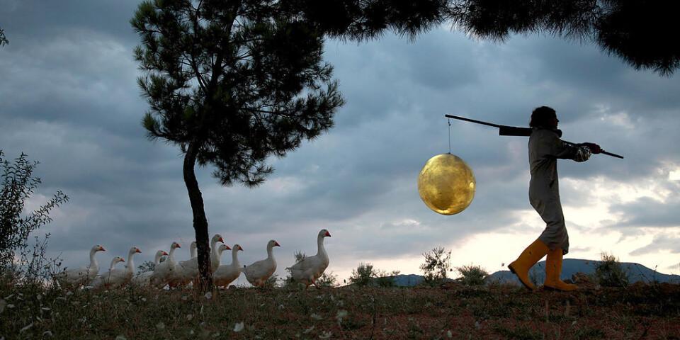 """Bild från """"Moon goose colony"""" av Agnes Meyer-Brandis, ett av verken som visas på utställningen """"Moonlight"""" på Hasselblad center i Göteborg. Pressbild."""