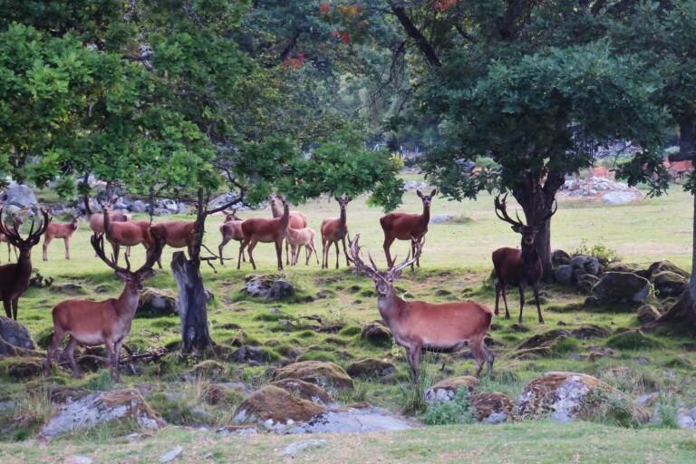 Satsning kan ge fler hjorthägn i länet