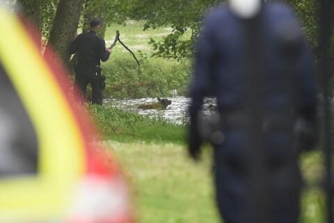 Här jagar polisen den skadeskjutna hunden