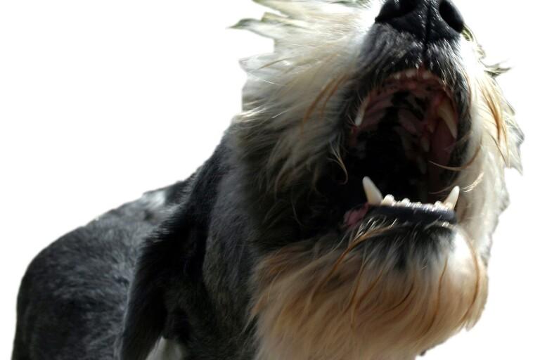 Länet: Kastade sten och dödshotade grannen – ansåg att hans hund hade företräde