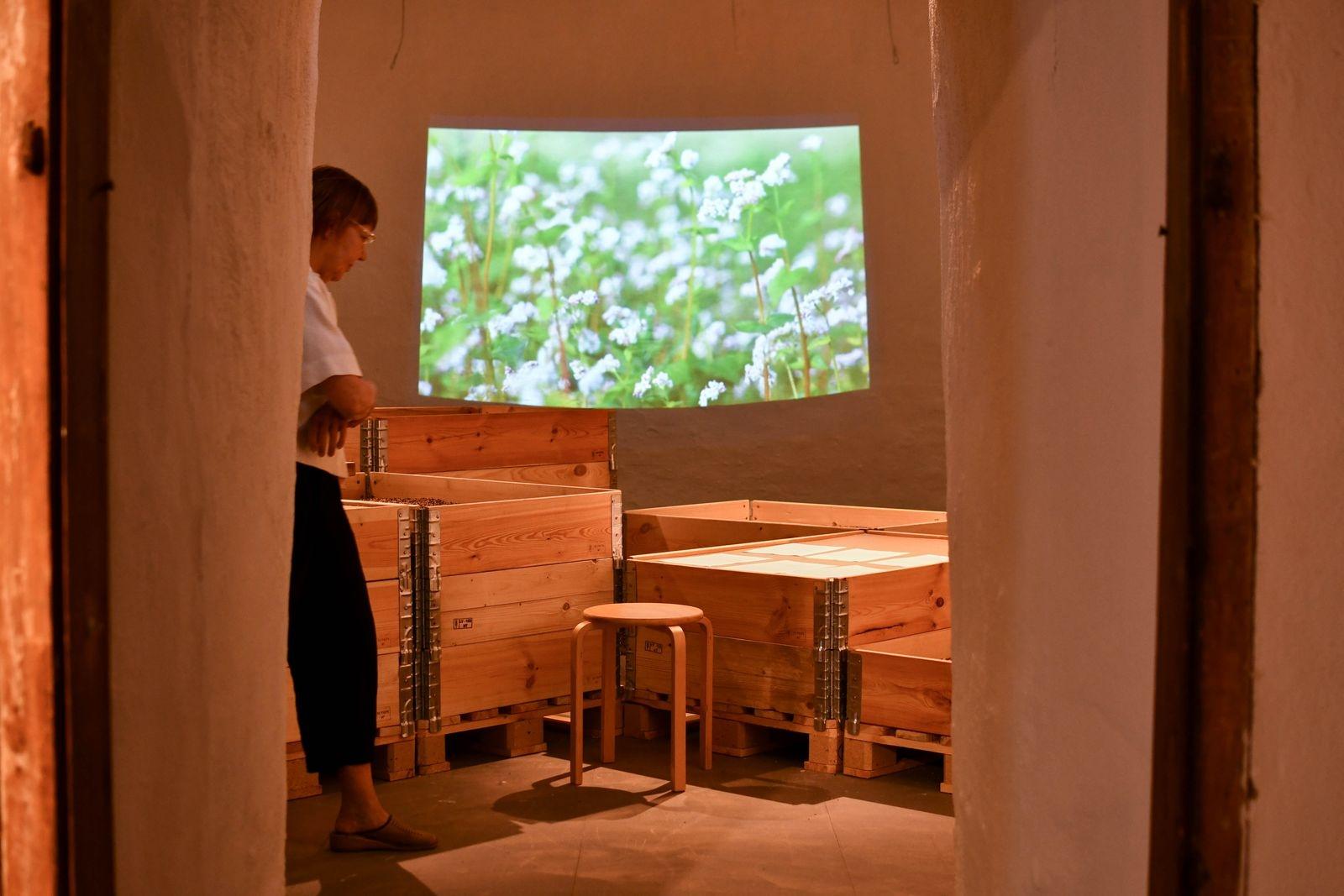 I utställningen Livs-medel visas foton, en film och texterna ur en skrift om örten bovete från ett kulturhistoriskt perspektiv.