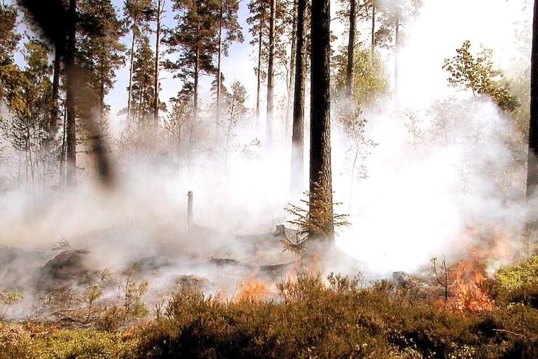 """Skogsbrand: Räddningstjänsten stannar över natten och bevakar: """"Kritiskt i början"""""""