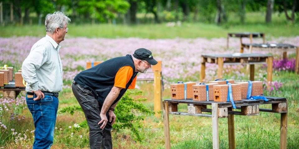 Thomas Karlsson och Thomas Nolin inspekterar ett gäng av de små bisamhällena som lämnats på parningsstationen på Hasslö.