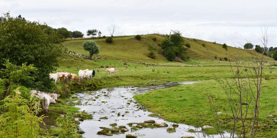 Tommarpsån är en av åarna i projektet.