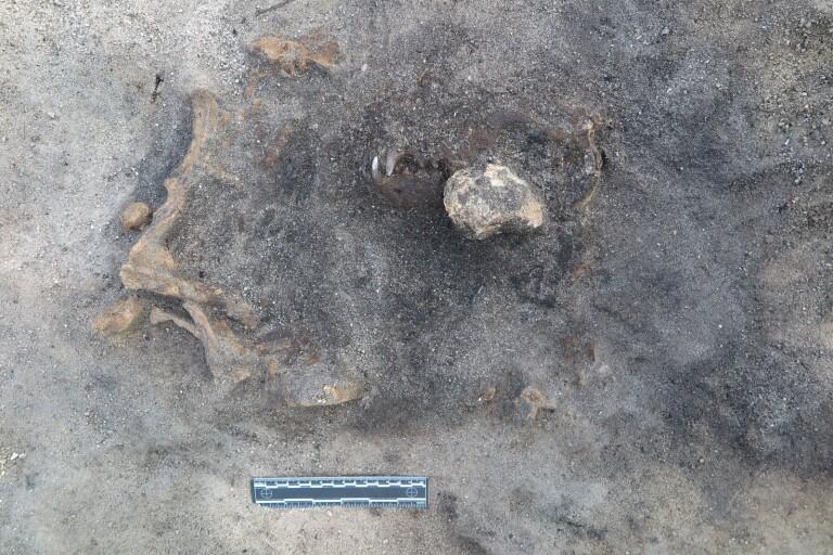 Unikt fynd: Här ligger en stengammal hund begraven