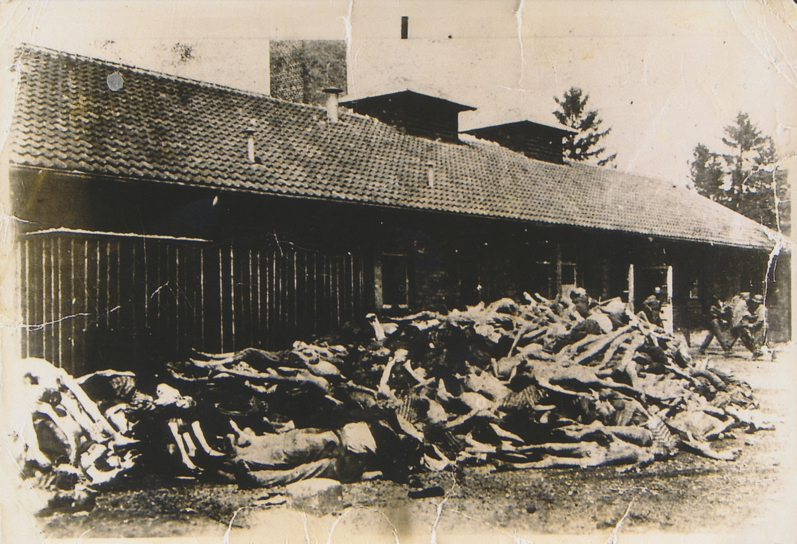 De döda staplades i högar utanför barackerna. Bilden kommer från Dachau, som var det första av nazisternas koncentrationsläger.