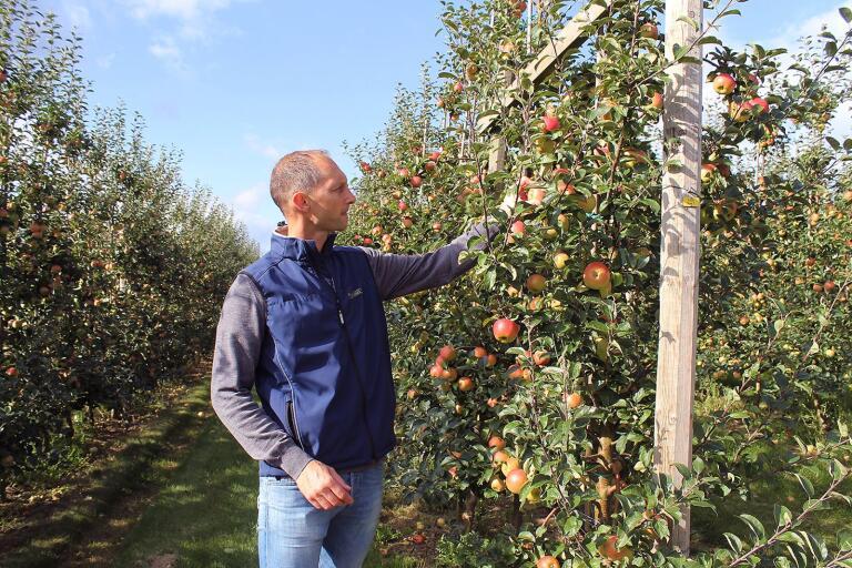 Henrik Stridh, vd på Äppelriket, om äppleskörden 2019.