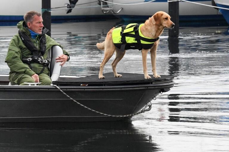 Polisen tar hjälp av specialsökhundar