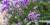 Kommunen storsatsar – landskapsarkitekt bakom sommarens planteringar