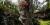 """På """"dockornas ö"""" i Xochimilco i Mexico har hundratals mer eller mindre lemlästade dockor hängts upp i träd och på byggnader."""
