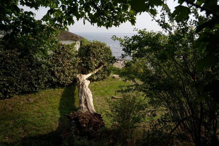 Svarte: Dött träd föll in i trädgård