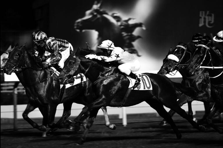 Hästbilder på Fotografi Centrum