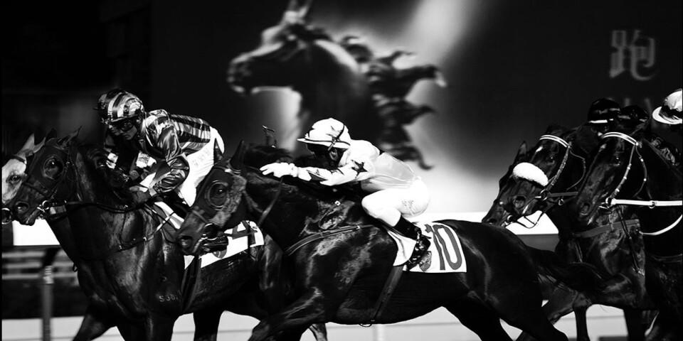 Fram till den 31 juli visas Annika Vannerus fotografier av galopphästar på Österlens Fotografi Centrum i Smedstorp. Vannerus har tagit svartvita bilder på hästarna in action på och runt banorna under Hong Kong Horse Racing. Hong Kong ses som galoppsportens Mecka och i Smedstorp visas dessa bilder för första gången.