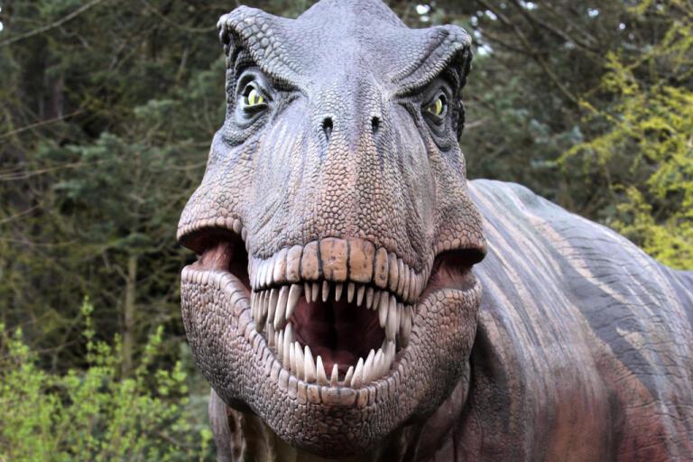En kopia av en Tyrannosaurus rex, dinosaurien T-rex, som finns på Woodland Park Zoo i Seattle i USA. Arkivbild.