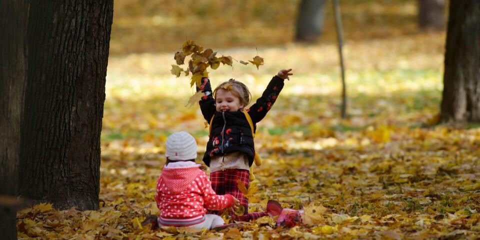 Under höstlovet bjuds det på flertalet aktiviteter för lediga barn och ungdomar i Karlshamns kommun.