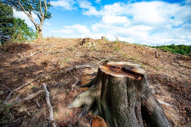 Politiskt storbråk om skogsskövlingen i Minnesberg