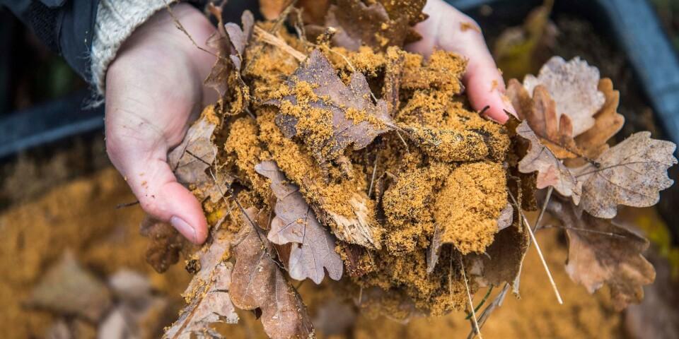 Konstgjord mulm består av sågspån, träbitar och eklöv.