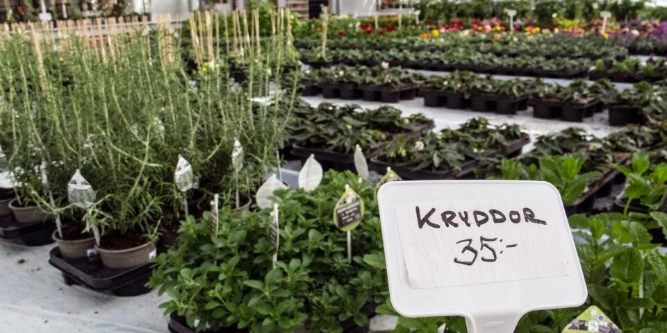 Allt fler vill odla ätbart, framförallt kryddor.