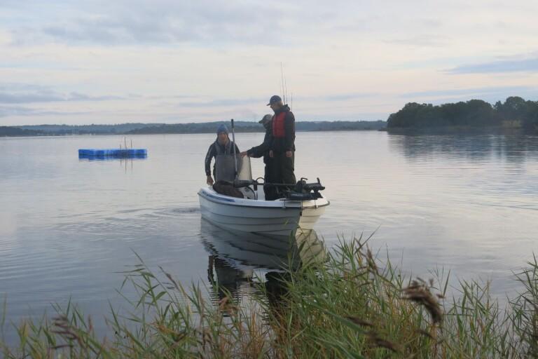 200 fiskare söker efter Blekinges största gädda