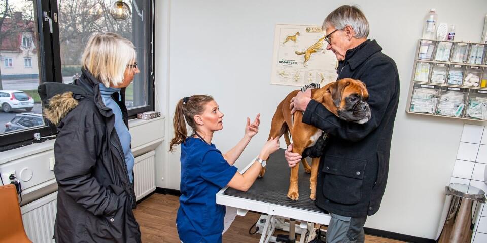 Hundägarna Karin och Anders Salomonsson var oroliga över några prickar hunden Hooch fått på magen.