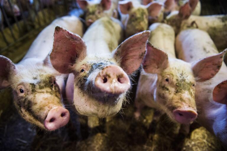 Hot och trakasserier mot bönder har ökat de två senaste åren, enligt en undersökning som genomförts på uppdrag av Lantbrukarnas riksförbund. Arkivbild.
