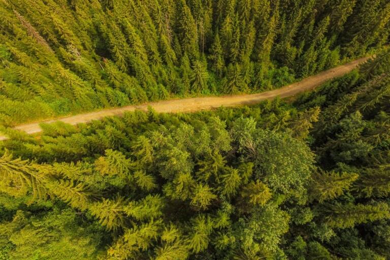 Alla skogsbilvägar ska inventeras