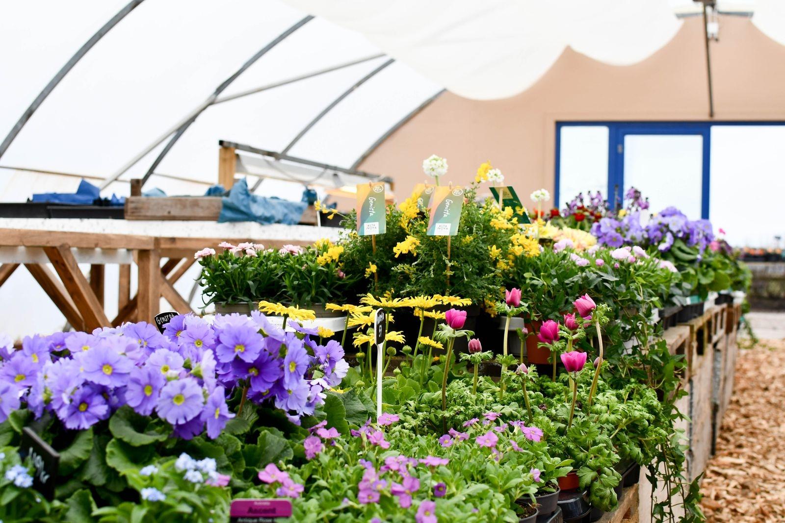 Säsongen startades med en härlig buffé av blommor för både ute och inne.